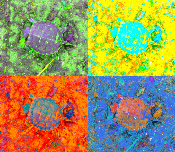 A_Sequence_of_Toddler_Turtles_a_4green_thumb