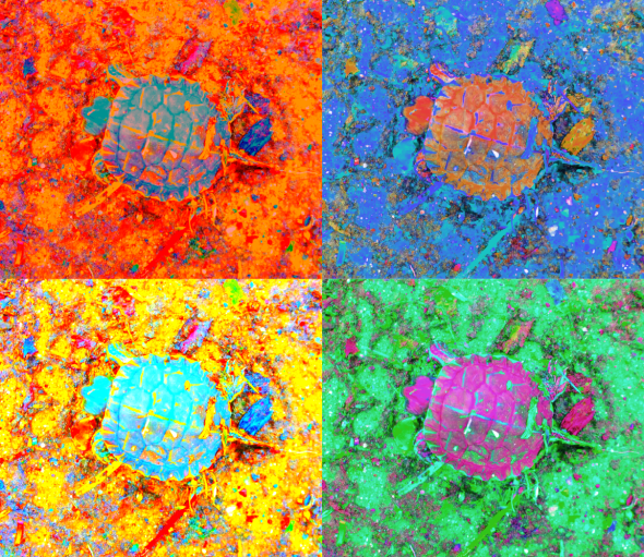 A_Sequence_of_Toddler_Turtles_a_4orange_thumb