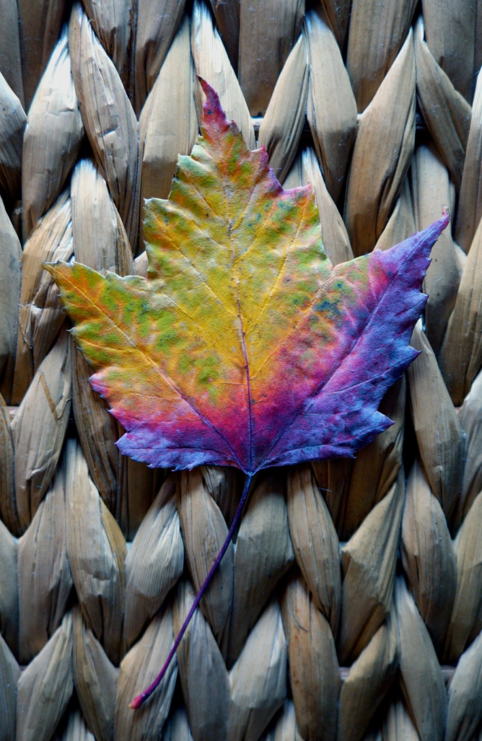 Maple_Leaf_Kaleidoscope_017_a_1_sm