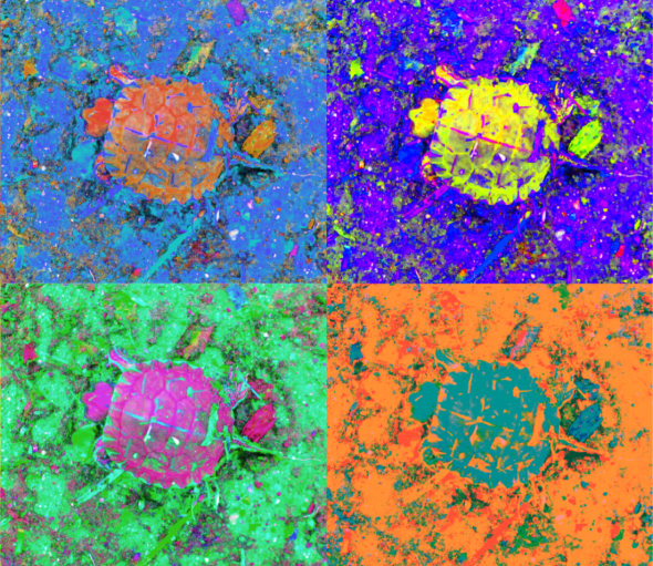 A_Sequence_of_Toddler_Turtles_a_4blue_thumb