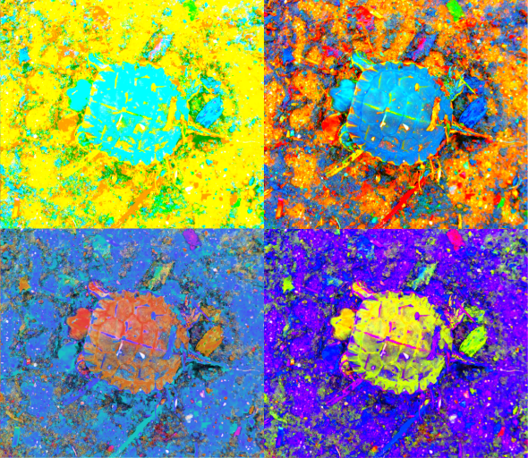 A_Sequence_of_Toddler_Turtles_a_4yellow_thumb