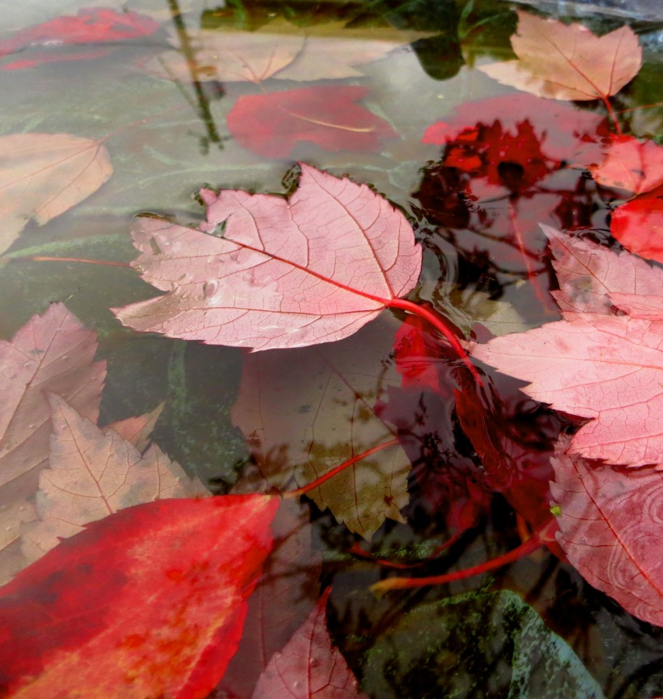 Floating_in_Reds_IMG_2431_a